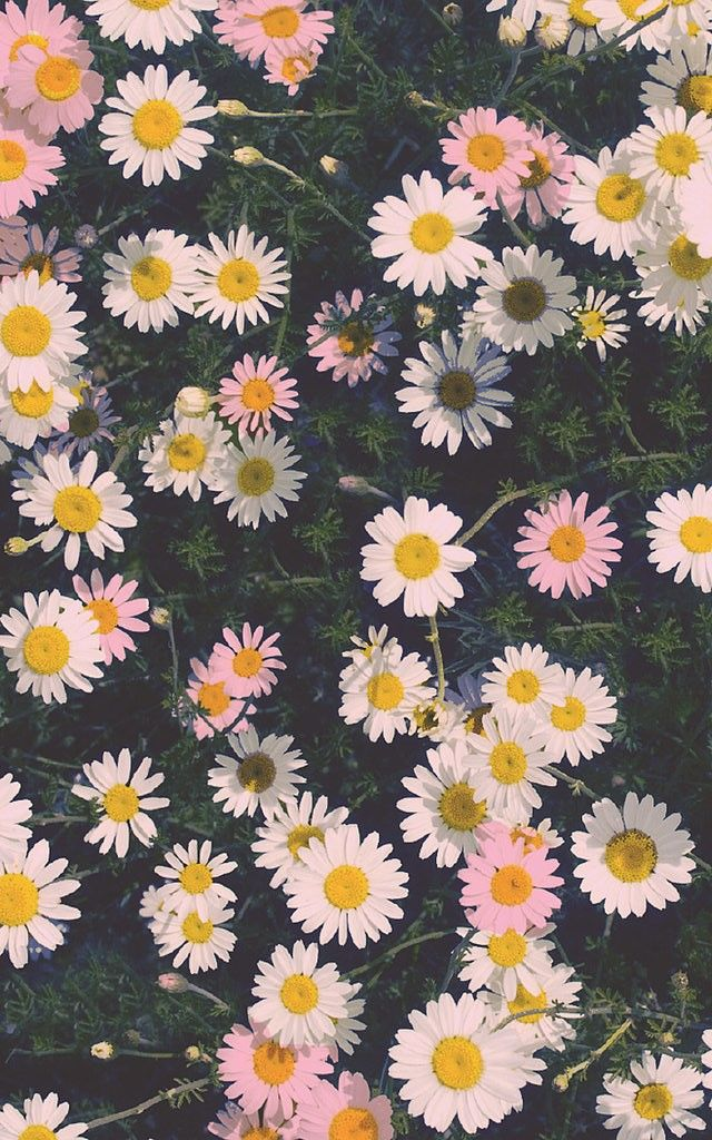 Daisy pattern wallpaper - photo#36