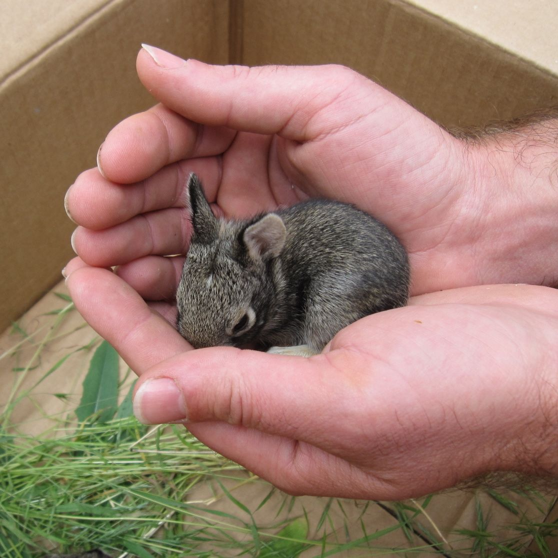 Cute animals for sale - Animal Really Cute Baby Bunnies For Sale