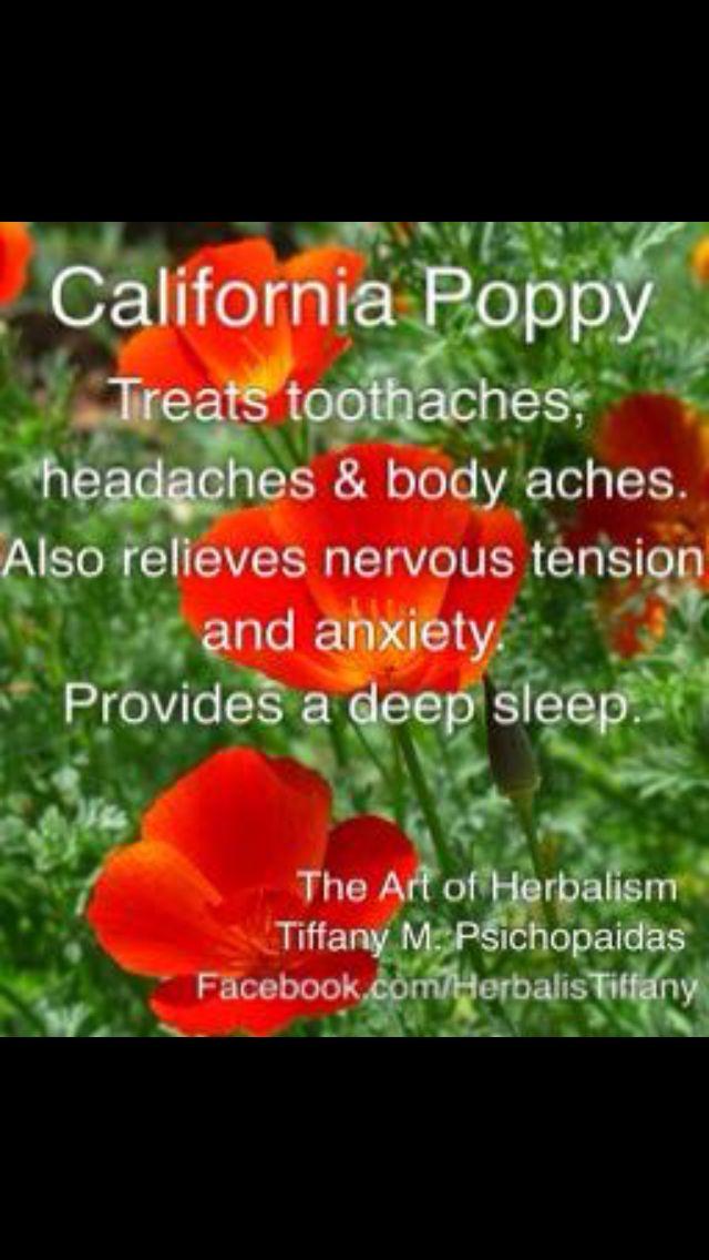 Healing benefits of California Poppy...