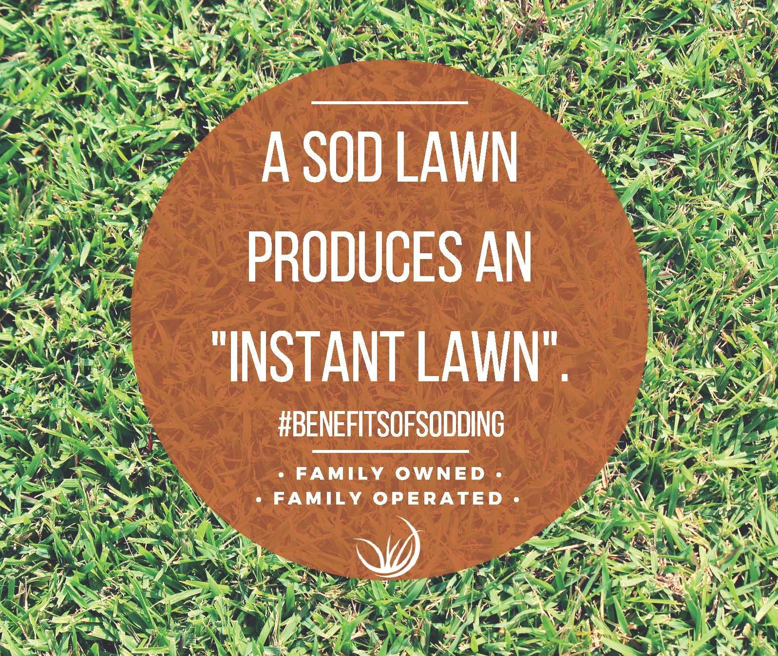 The Benefits Of Sodding Reseeding Lawn Lawn Yard Design