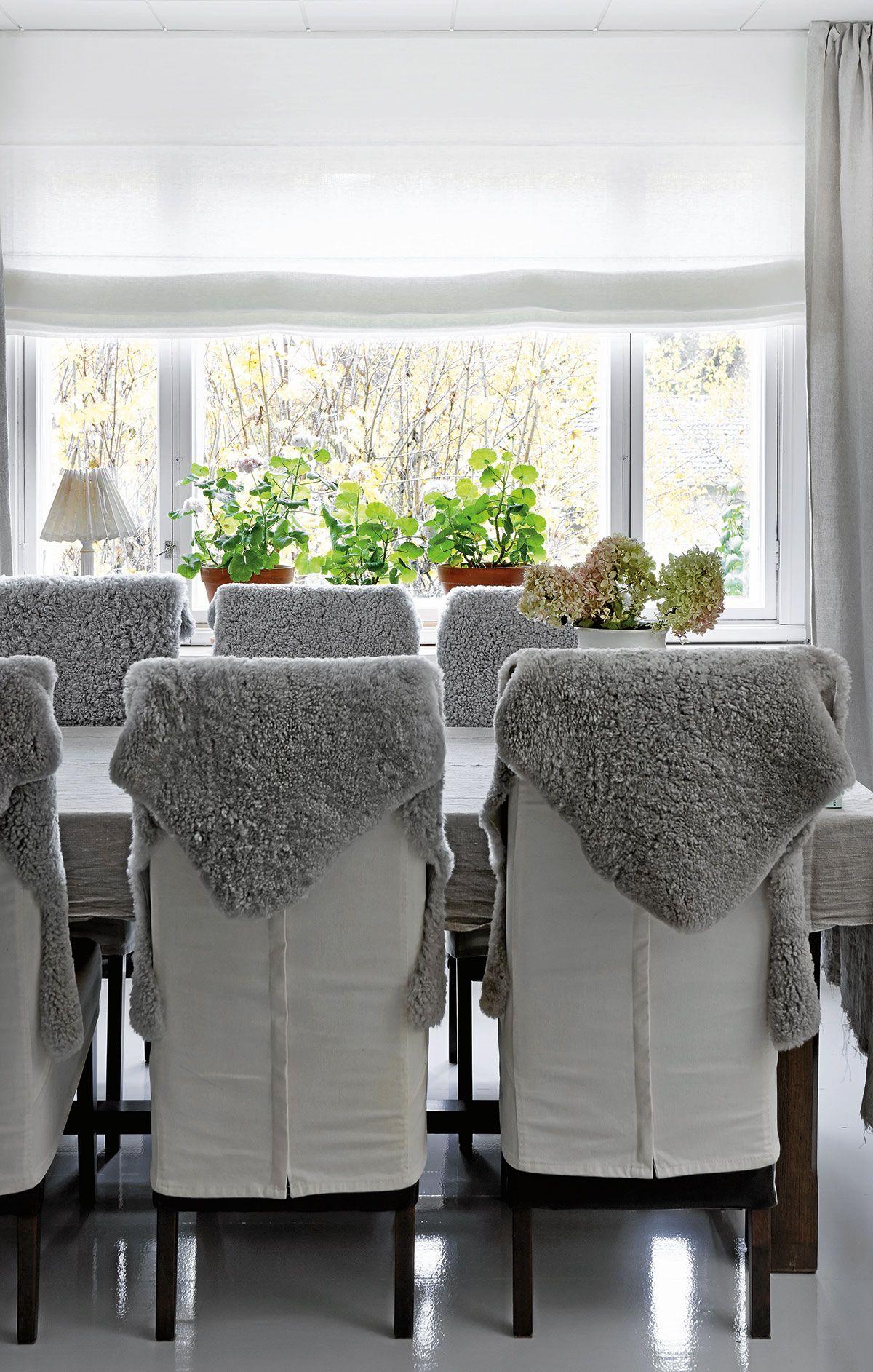 Lampaantaljojen päällä on pehmeä istua ja ne tuovat ruokailutilaan olohuonemaista mukavuutta. Mårbacka-pelargonit saavat runsaasti valoa ison ikkunan ääressä.