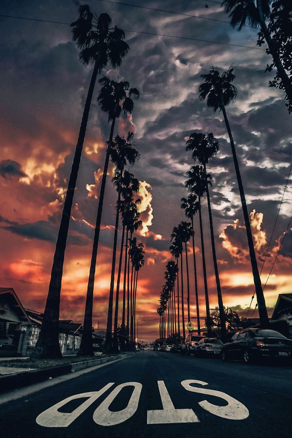 palm trees tumblr vertical. Los Angeles At Sunset With Palm Tree Lined Street. Trees Tumblr Vertical