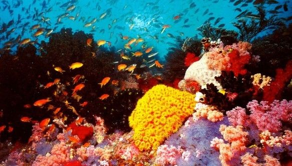Banana Reef, which is the most sought out diving site in the Maldives. It is called Banana Reef because it has the shape of a banana that extends 300 meters from north to south.