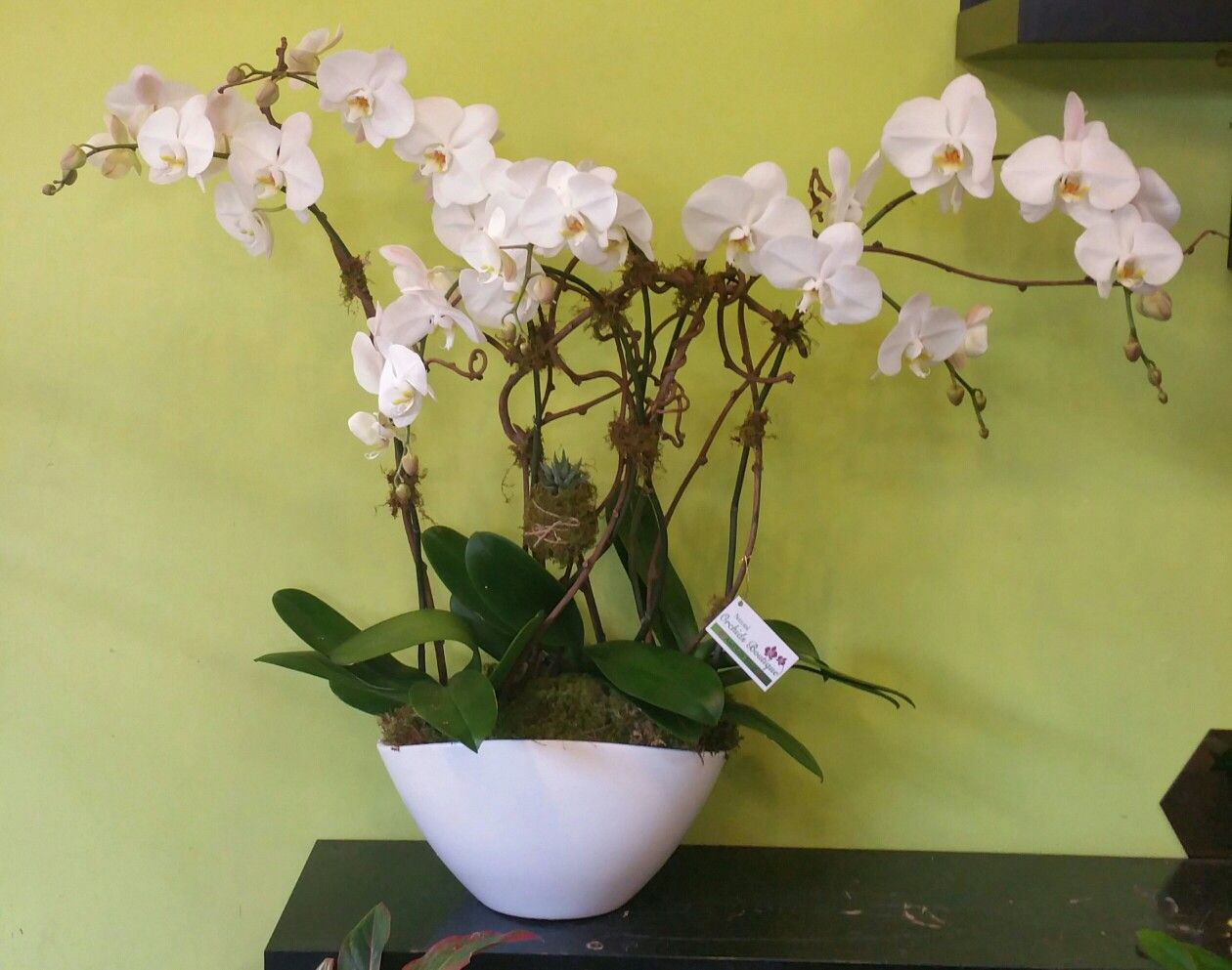 White Phalenopsis Orchid Arrangement On A White Ceramic Vase Beautiful Orchids Orchid Arrangements Orchids