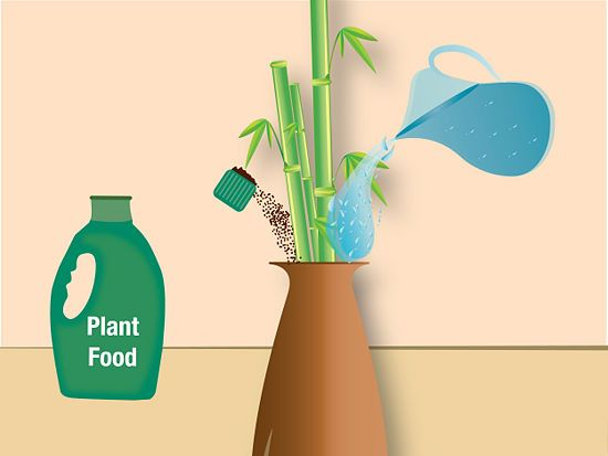 Take Care Of Bamboo Plants In Water Lucky Bamboo Water And Plants