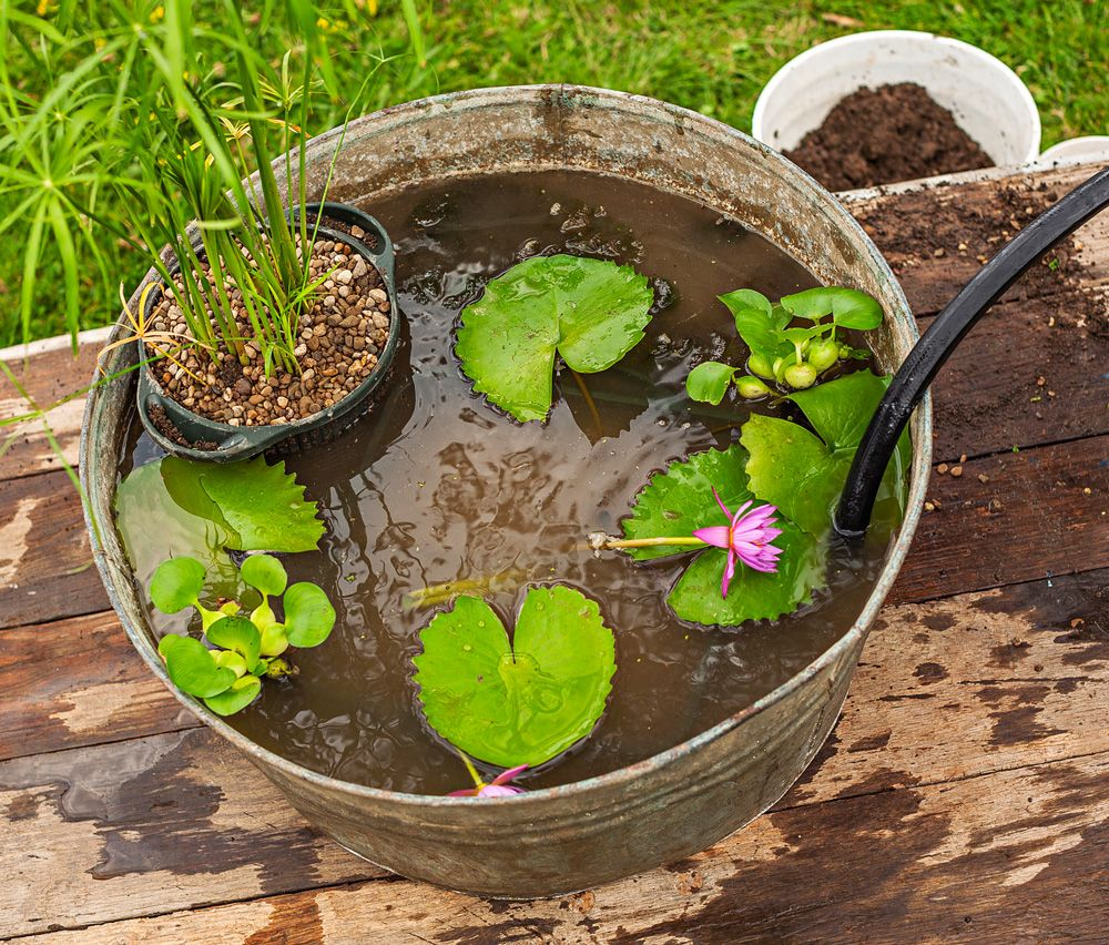 container water garden. how to plant a water container garden