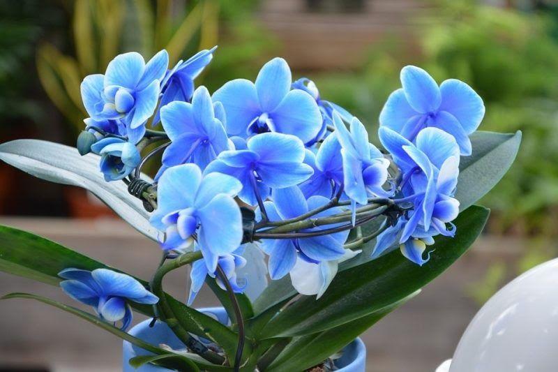 Wow 25 Contoh Gambar Bunga Hias Inilah 33 Macam Macam Tanaman Hias Dan Penjelasannya Daftar Jenis Tanaman Hias Berbunga Yang Di 2020 Bunga Tanaman Tanaman Hias Daun