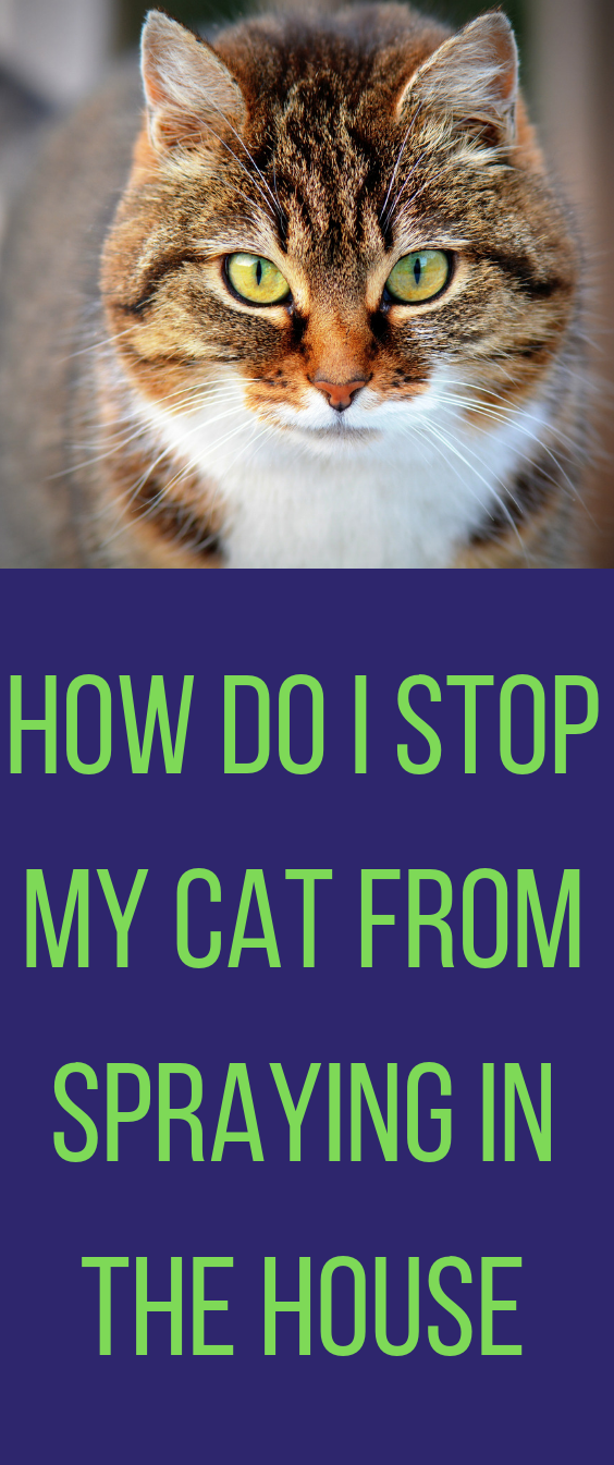 Is Your Cat Spraying All Over Your House And Marking On Your Furniture Check Out This Cat Caring And Cat Spraying Tips On How To G Cats Cat Spray Cat Training