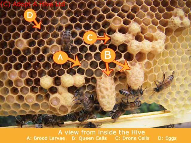 45796e1a251c6c3e61a4d9ac2bb82741 - How To Get Rid Of Small Hive Beetle Larvae