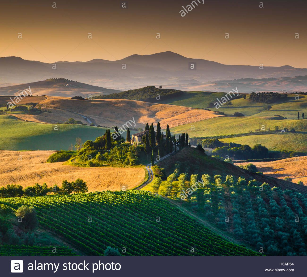 Download This Stock Image Scenic Tuscany Landscape With Rolling Hills And Valleys In Golden Morning Light Val D Orcia Italy H3ap64 From Alamy Italia Campo