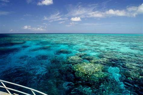 Great Barrier reef!  So beautiful!