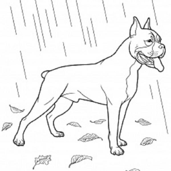 Boxer Dog Coloring Pages Dog Coloring Page Coloring Pages Dog Drawing