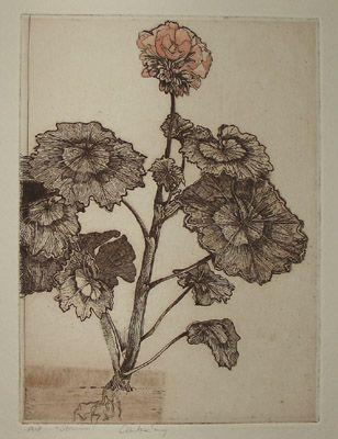 Geranium, image
