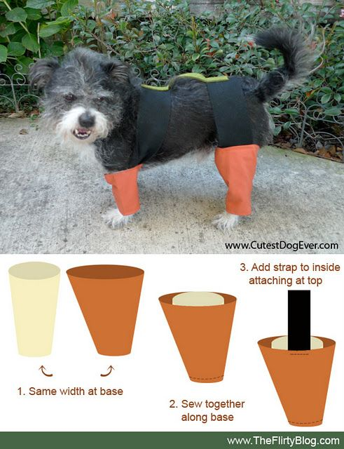 How To Turn Your Dog Into A Live Chia Pet This Halloween Chia