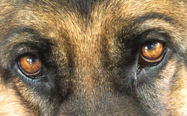 Can Dogs Recognize Faces In Pictures
