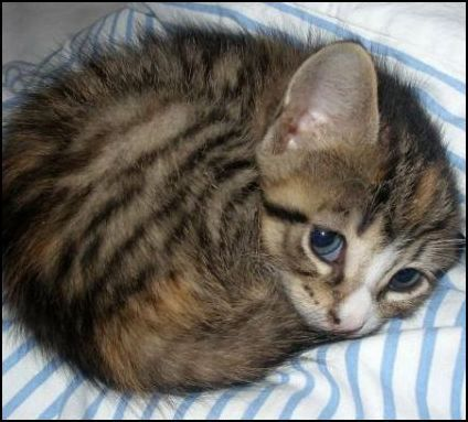 cat swaddling