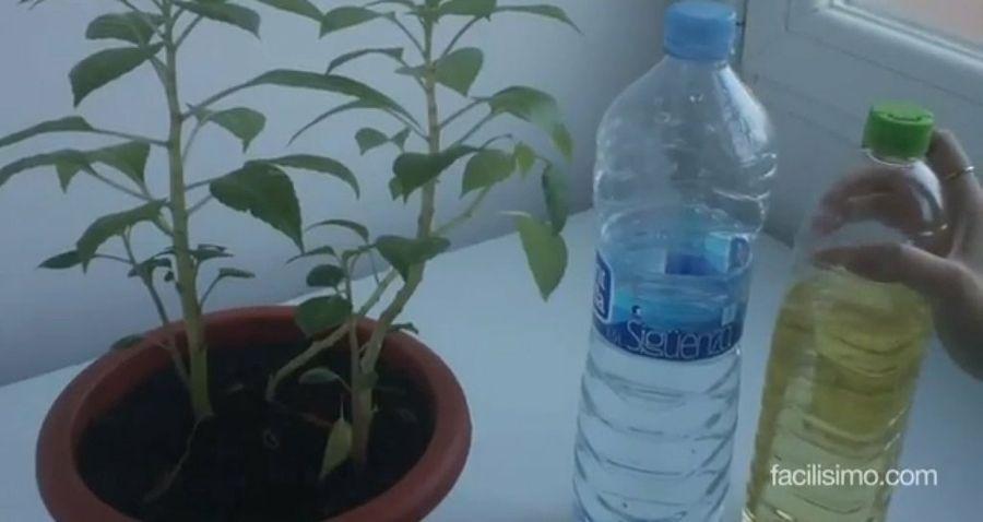 El mejor truco para quitar la cal de las hojas plantas red facilisimo garden - Quitar cal del agua ...