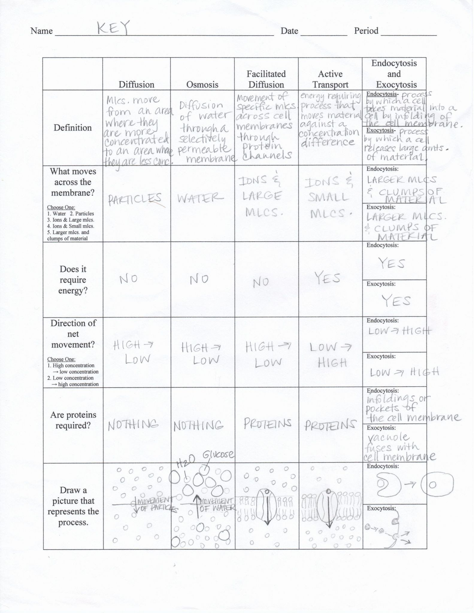 Cellular Transport Worksheet Answer Cellular Transport And