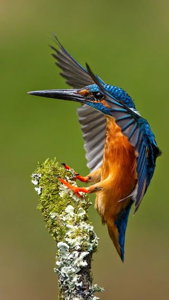 KIng Fisher Birds Colorful Kingfishers Or Alcedinidae Are A Family Of Small To Medium Sized Brightly Colored In The Order Coraciiformes