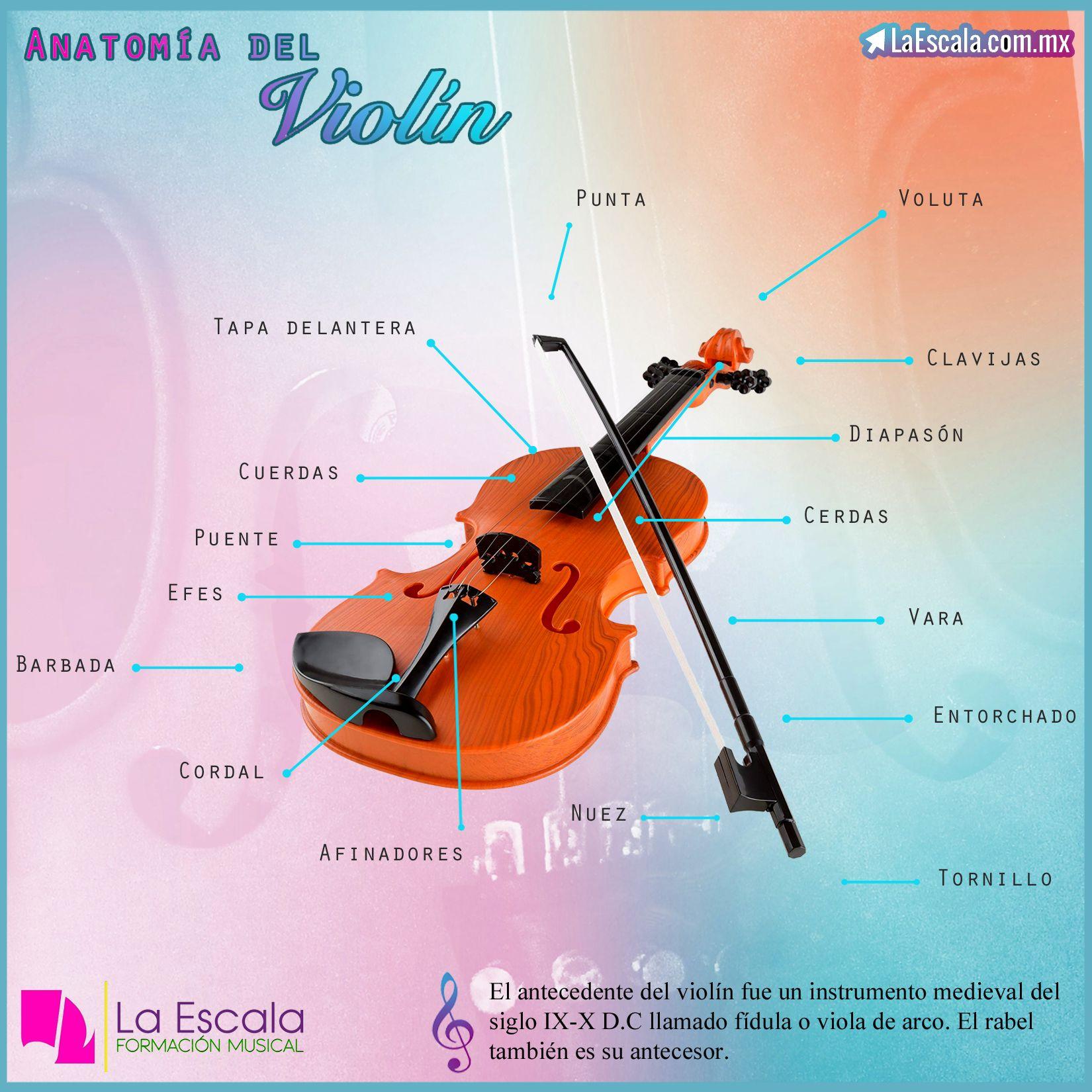 Partes Del Violin Violines Clases De Violin Libros De Musica