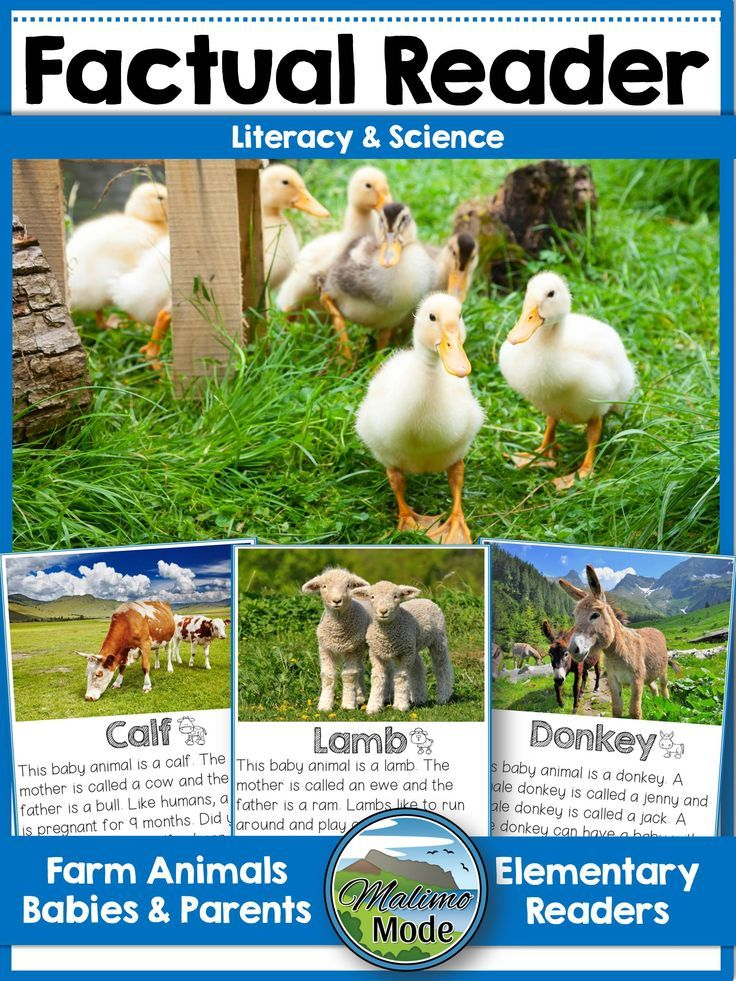 This reader is an eBook about farm animals babies and their parents. The text is factual, to the point and easy to read. Each animal has two pages with photos and facts. Content in the eBook reader ★ Calf, cow and bull ★ Foal, mare and stallion ★ Piglet, sow and boar/hog ★ Donkey, jenny and jack ★ Kid, nanny and billy ★ Lamb, ewe and ram ★ Chick, hen and rooster ★ Kitten, molly and tom ★ Puppy and dogs ★ Rabbit, doe, buck