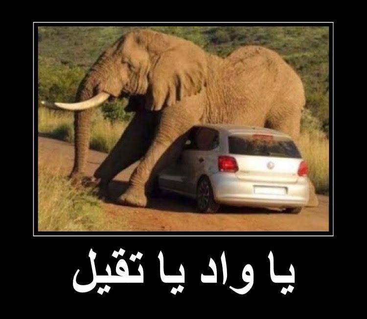 يا واد يا تقيل يا فيل Elephant Animals