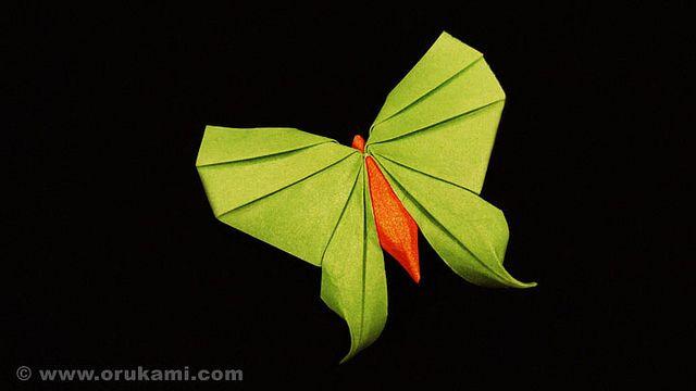 Rikki Donachie Origami Swallowtail Butterfly