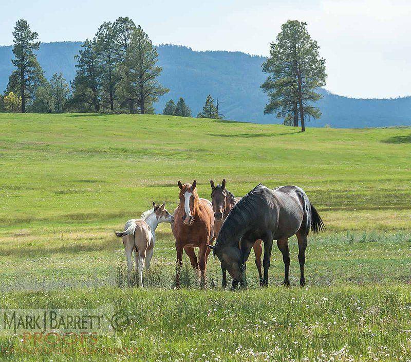 7391-3V.jpg :: Quarter Horse herd