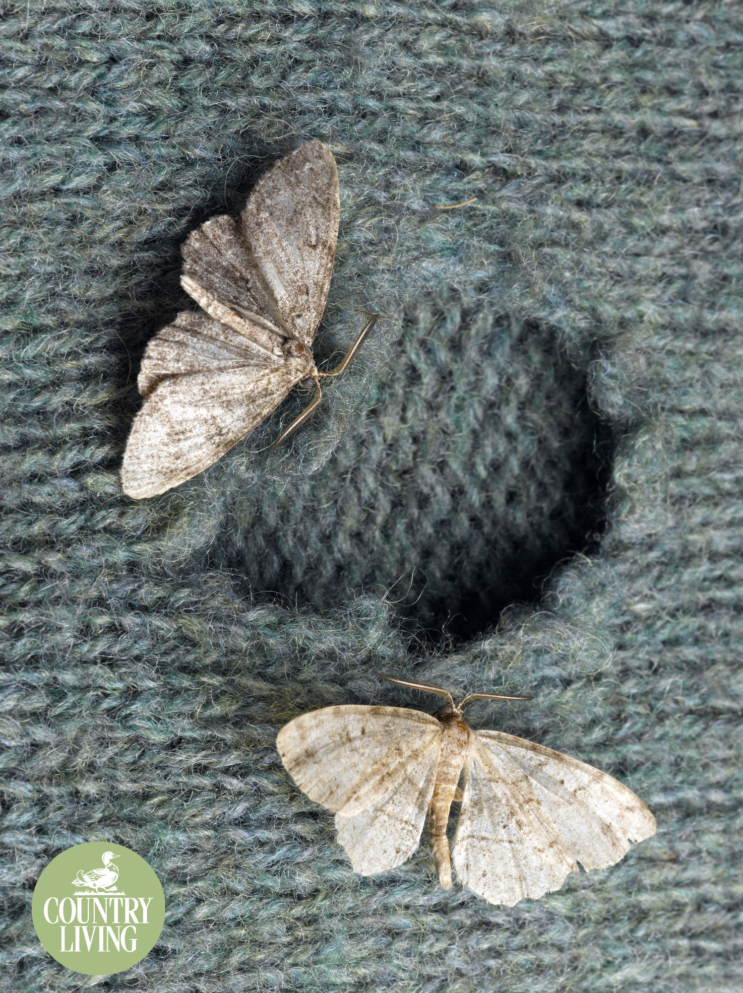How to get rid of the moth in the apartment - folk and purchase means 89