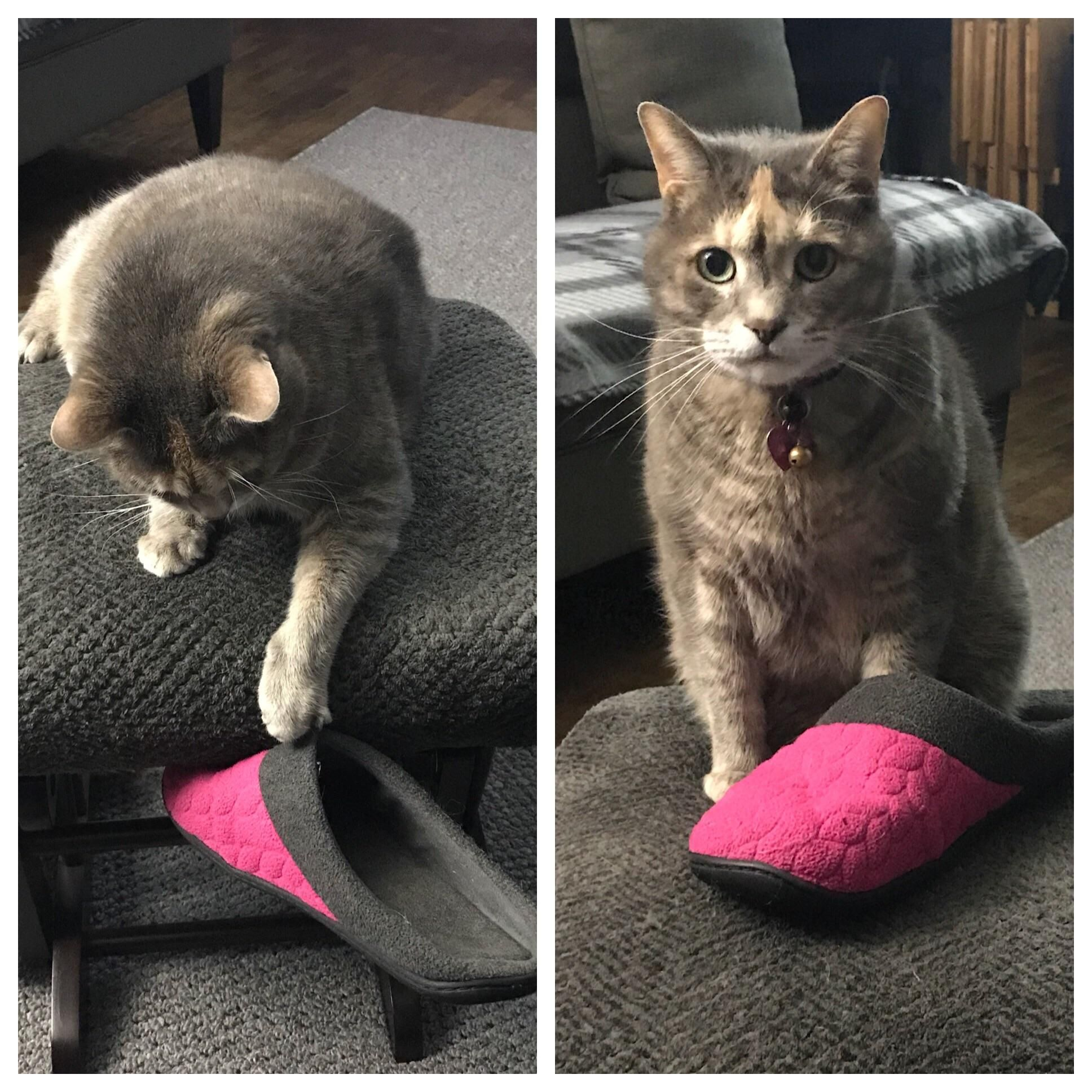She stole my slipper. Then dared me to try and get it back.