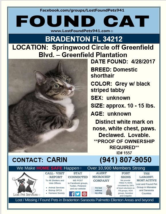 Do You Know Me Found Cat Lostcat Tiger Bradenton Fl Manateecounty Lostpetservices Share Losing A Pet Service Animal Manatee County