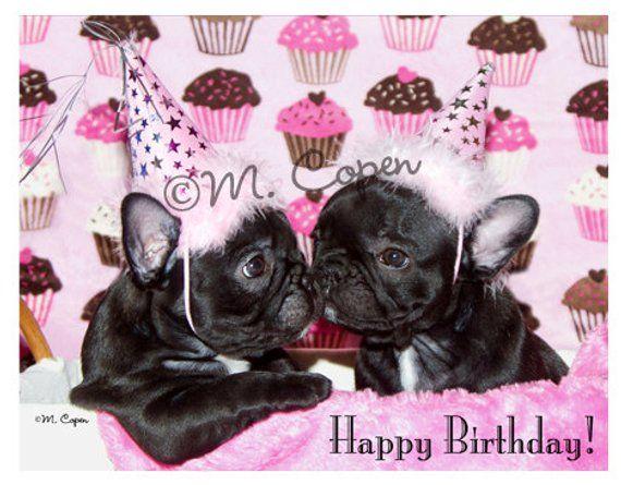 Happy Birthday French Bulldog Cards Set Of 2 Cards Carte