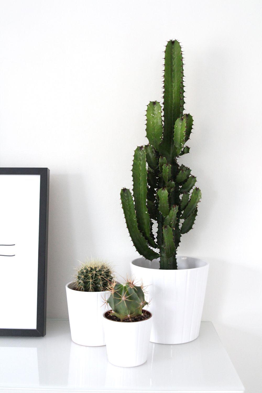 cactus blackandwhite plantes et fleurs pinterest cactus decor cactus et decor. Black Bedroom Furniture Sets. Home Design Ideas
