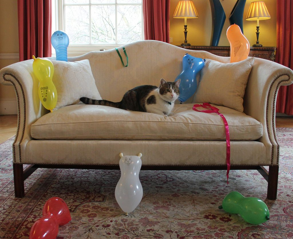 Larry at his party thrown by No 10 staff...with mice balloons!