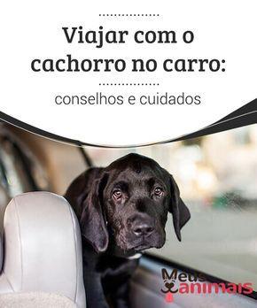 Viajar com o cachorro no carro: conselhos e cuidados Para alguns é uma #experiência muito #divertida, para outros não pode haver nada mais #traumático. Você quer saber como viajar com o #cachorro no carro? #Conselhos
