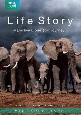 Xem Phim Câu Chuyện Sinh Tồn - Life Story