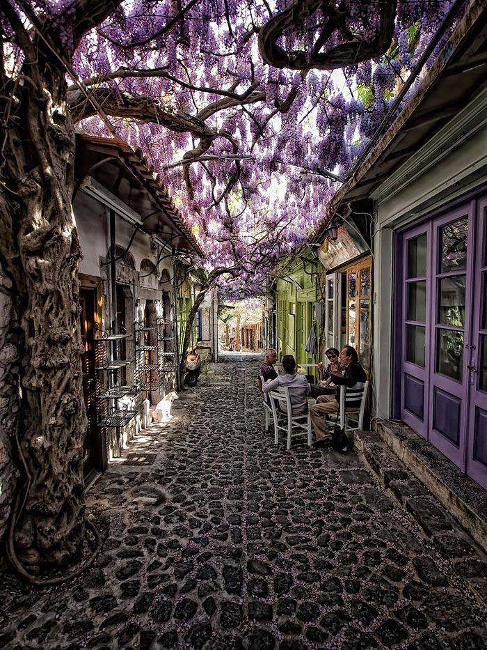45+ Of The World\u2019s Most Magical Streets Shaded By Flowers And Trees The Japanese observe the spring blossoms as a part of hanami \u2013 the appreciation of the transient beauty \u2013 but you don\u2018t need a deep, philosophical meaning to enjoy a leisurely stroll down these picturesque streets. And for those of us still in the icy grip of winter, they\u2018re a nice reminder of the coming \u2026 #traveltogreece