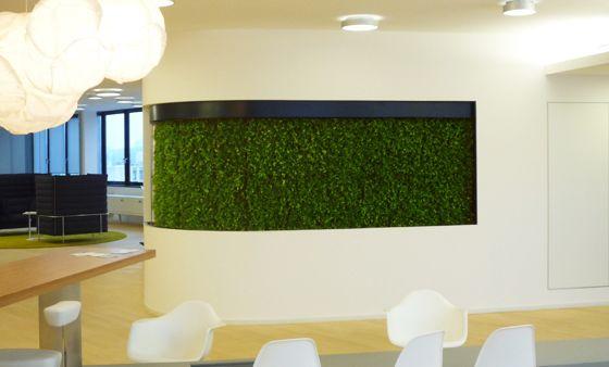 Проекты - Вечные цветы - зеленые стены с мхом и растений стабилизировалась