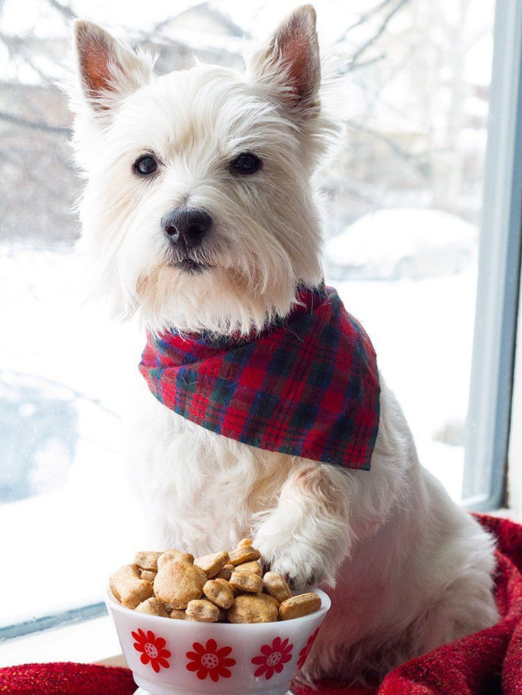 Cinnamon apple homemade dog treats do you have a dog with