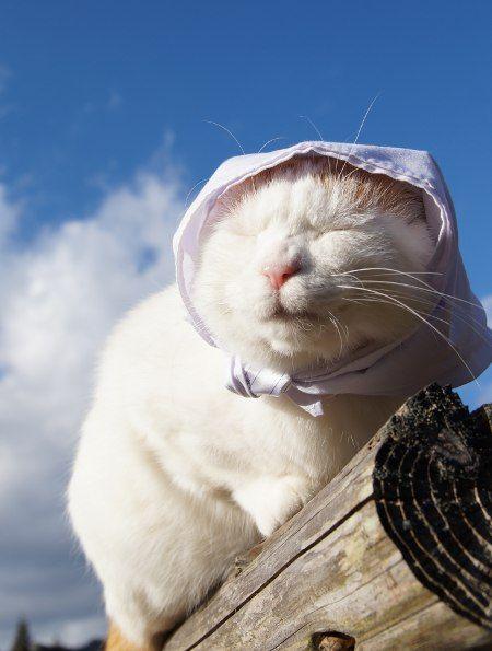 かご猫 blog かご猫 猫 癒し 猫
