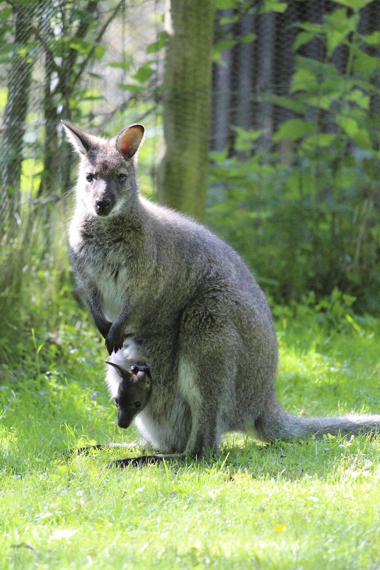 Tierpark Kassel