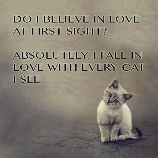 Quotes About Cats Do I Believe In Love At First Sight Absolutelyi Fall In Love With .