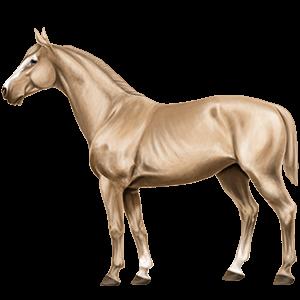 Frederiksbork, Pferd Paint Horse Falbe mit Tobiano-Scheckung - Howrse