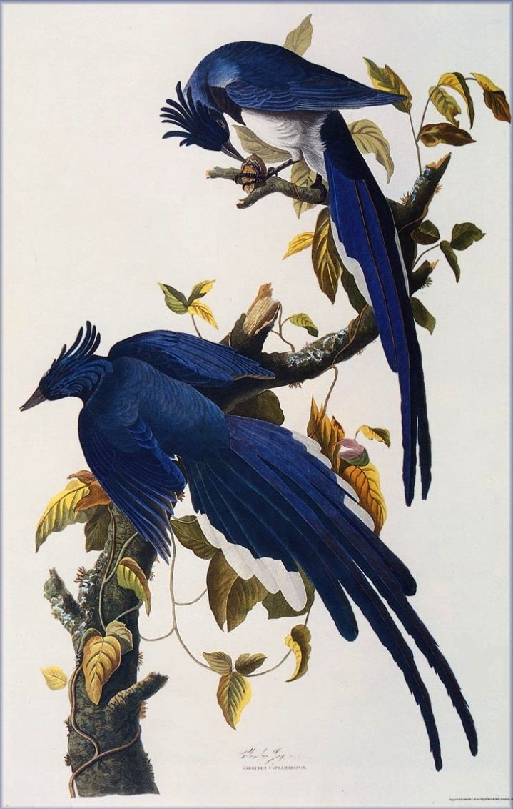 Birds by John James Audubon. This would be framed on my wall.