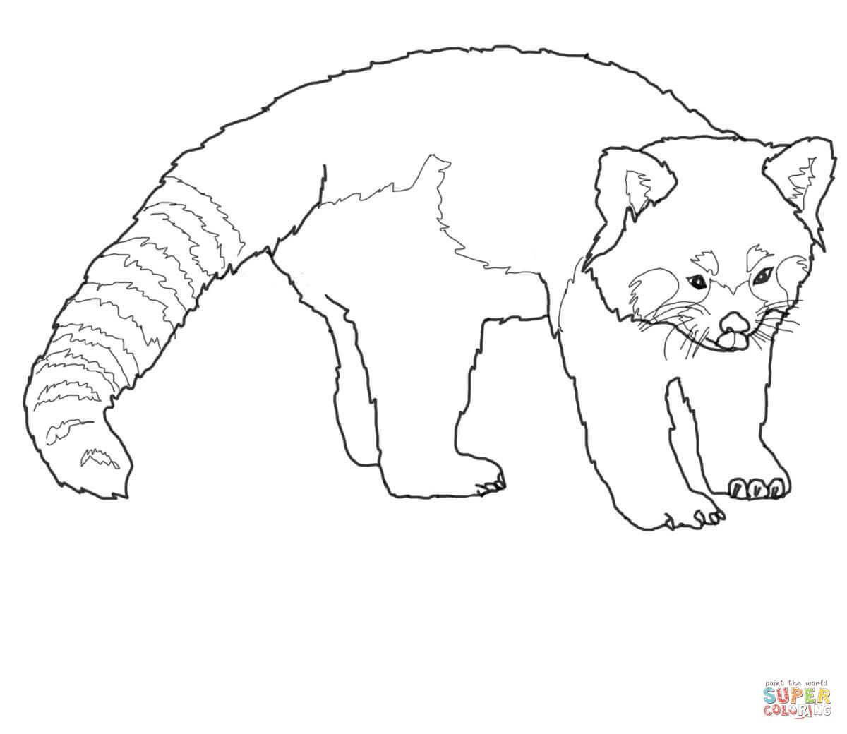 Best Of Red Panda Coloring Pages Panda