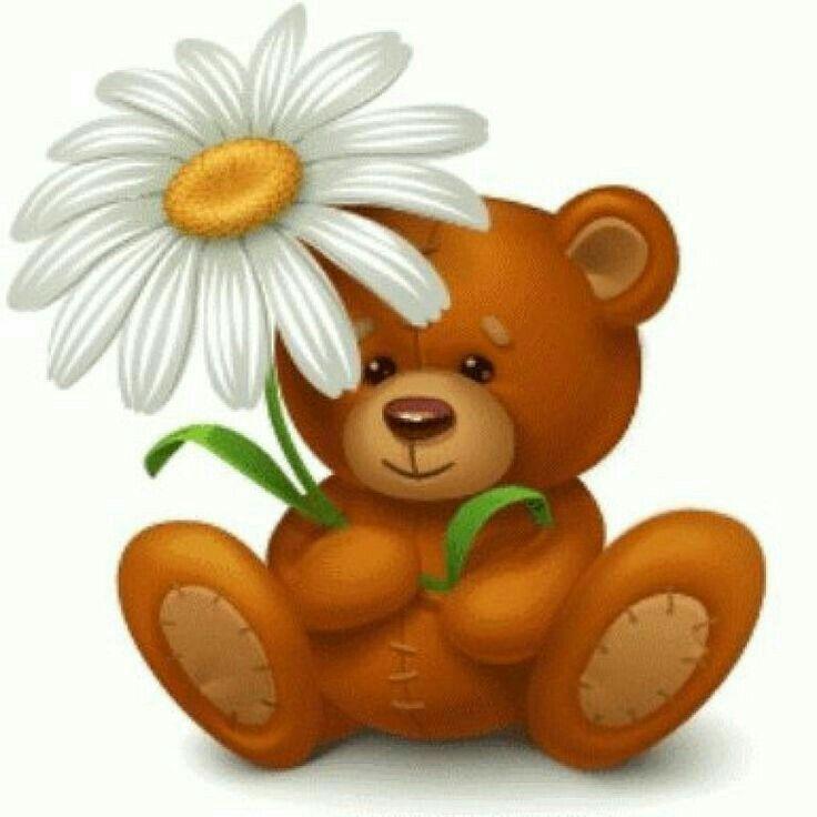 Открытка медведь с ромашками, картинки приколы картинки