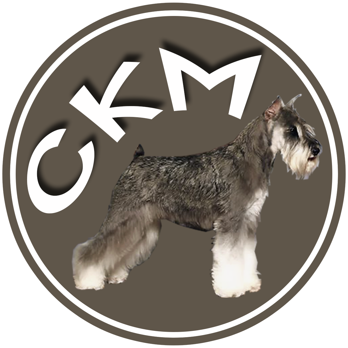 Miniature Schnauzer Puppies For Sale In East Texas Miniature Schnauzer Puppies Schnauzer Puppy Puppies For Sale