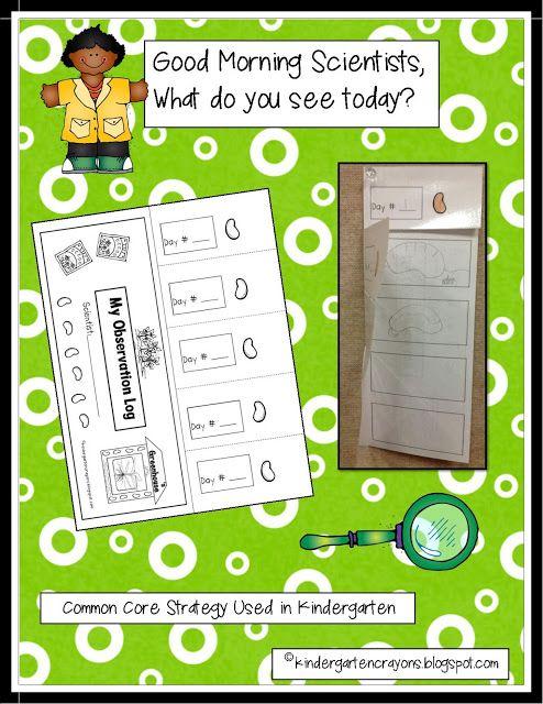 Are You Full of Bean In Kindergarten? Grab this freebie! - Kindergarten Crayons