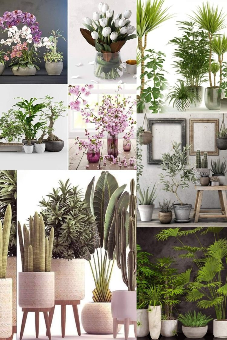 47 Plants Collection Free Sketchup Model In 2020 Decor Home Office Decor Decor Tutorials