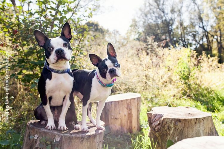 Happy Tails Pet Photography Www Happytailspetphotography Ca Two
